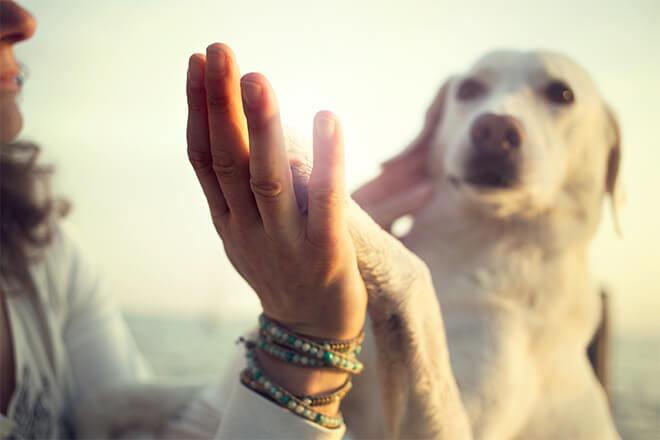 socializzazione cane umano