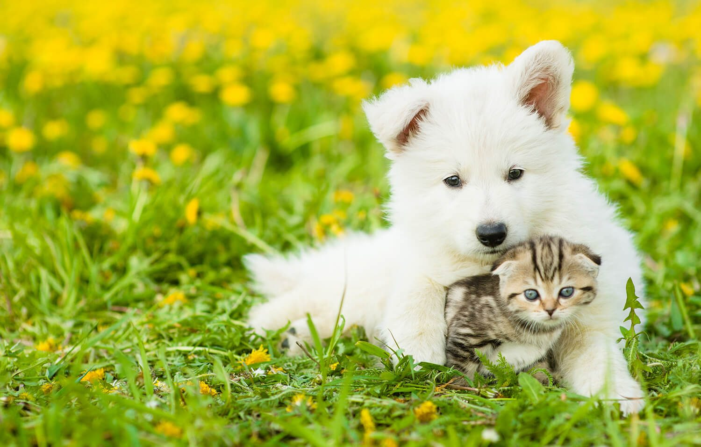 alitosi-cane-e-gatto