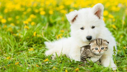 Alitosi del cane e del gatto: cause, rimedi e prevenzione