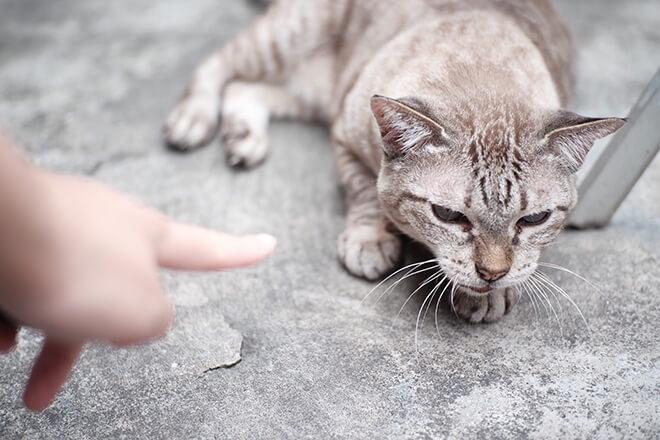 relazione-uomo-gatto-incomprensioni