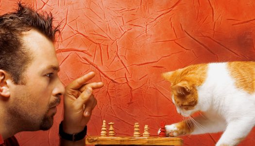 Uomo vs gatto… chi è il capobranco?