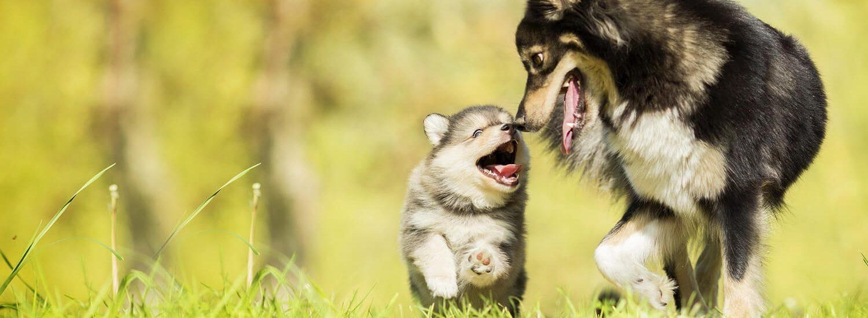 cuccioli-di-cane