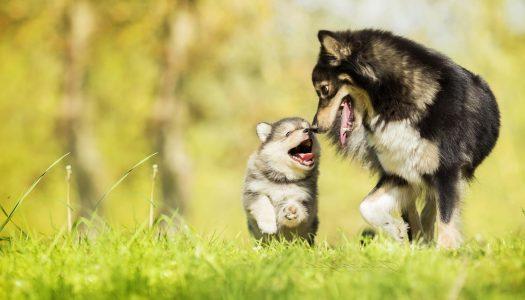 Cuccioli cane: l'importanza di stare con la mamma