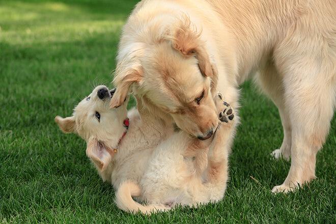 mamma-insegna-al-cucciolo-a-mordere