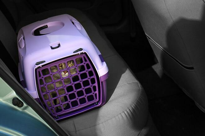 trasportino-gatto-sedili-macchina