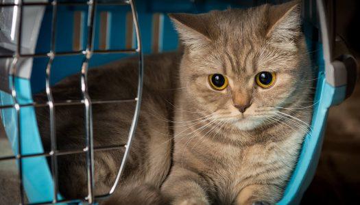 Trasportino per gatti: 7 consigli pratici per viaggiare sereni