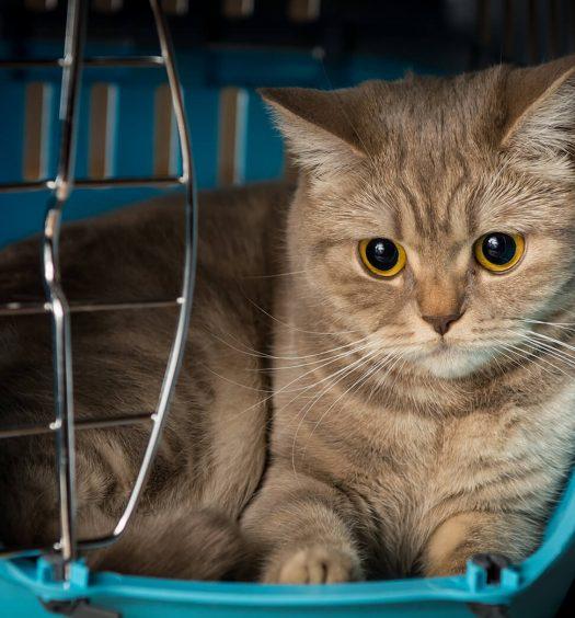 trasportino-per-gatti-7-consigli-per-viaggiare