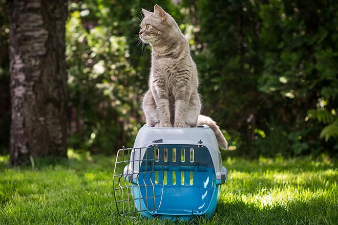 trasportino-per-gatti-una-sfida