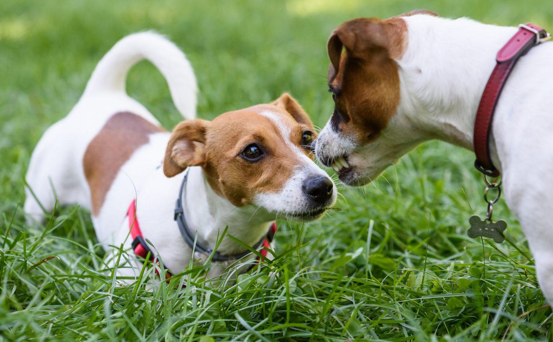 comunicazione-cane-spazio-distanze