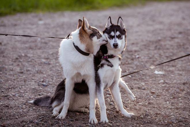 comunicazione-cane-spazio-distanze-2