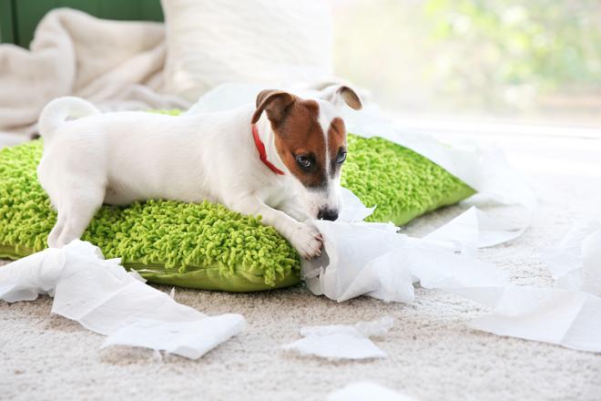 comportamento-cani-ansia-da-separazione