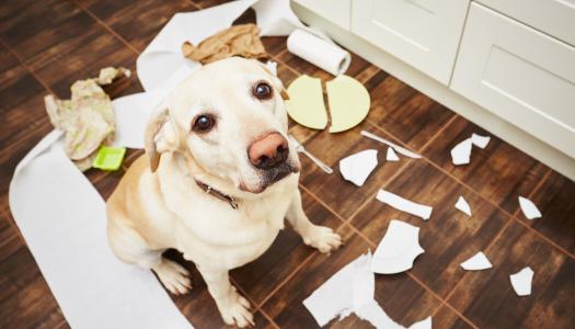 """Comportamento dei cani: i """"dispetti"""""""