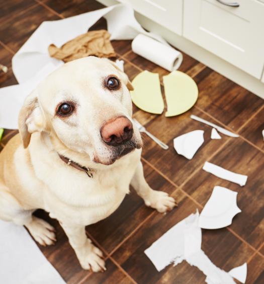 comportamento-cani-dispetti