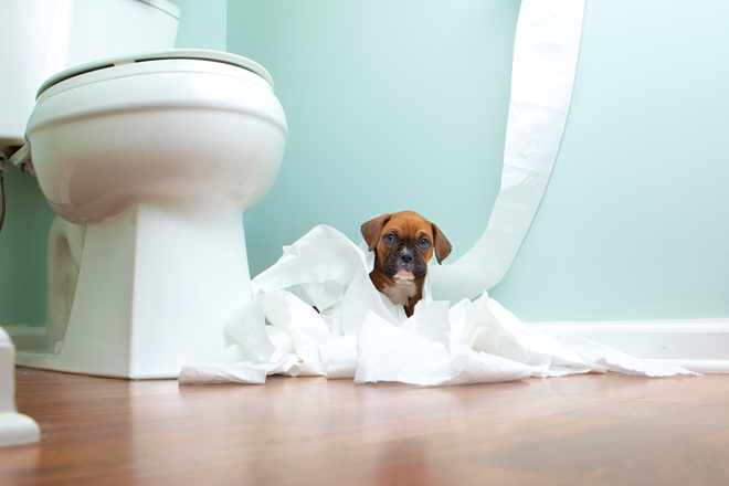 comportamento-cani-dispetti-carta-igienica