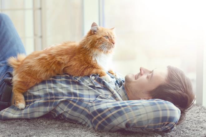 comportamento-dei-gatti-regole