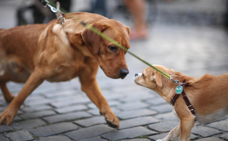 educa-il-cane-socializzare-con-altri-cani