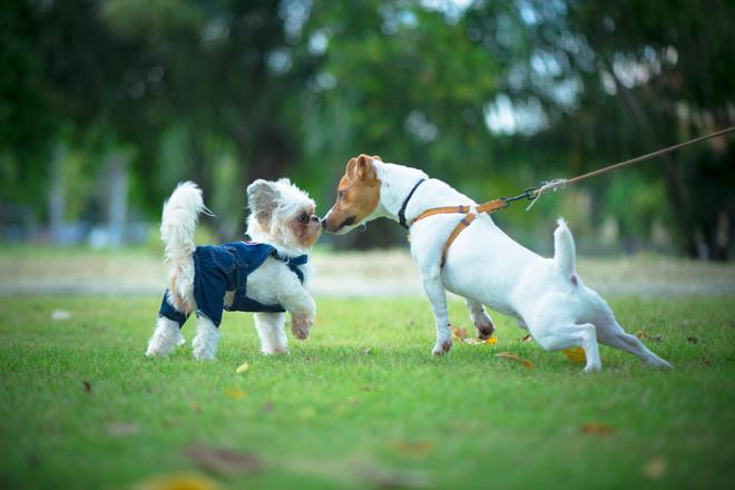 educare-il-cane-socializzare-guinzaglio