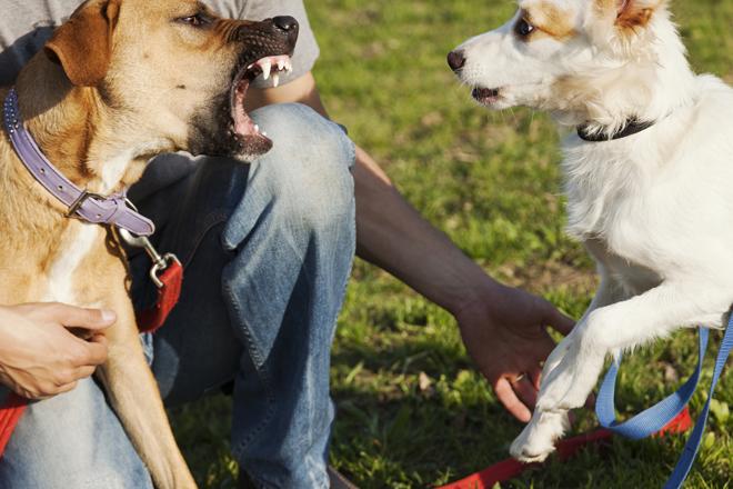 Come educare il cane a socializzare con altri cani - Educare il cane a non salire sul divano ...