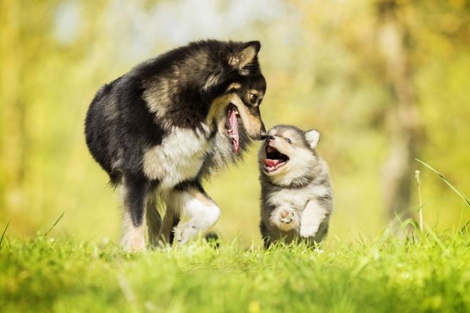 socializzare-con-altri-cani-importanza-mamma