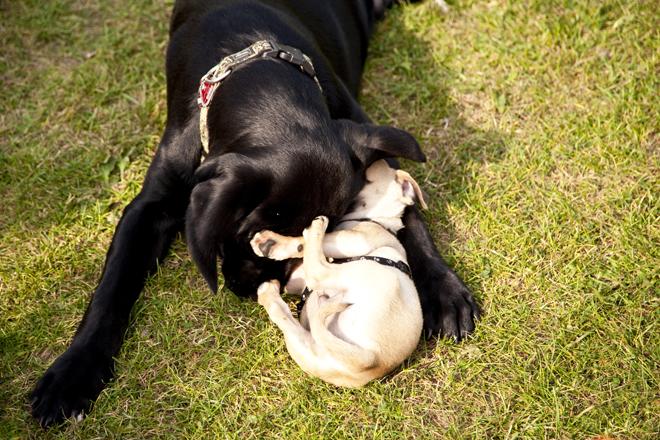 socializzare-con-altri-cani
