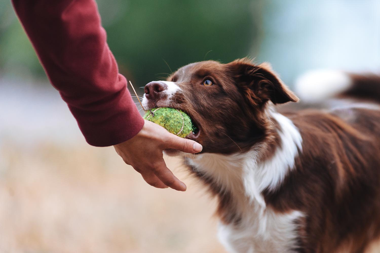 comportamento-cani-importanza-motivazioni