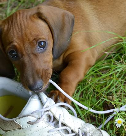 comportamento cani cucciolo morde tutto