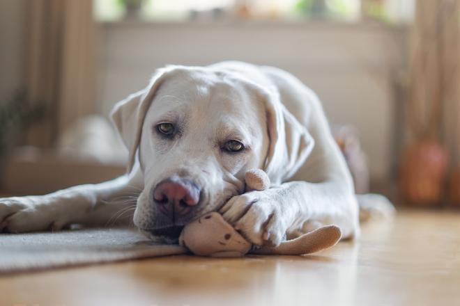 Il Tuo Cane Morde Tutto Ecco Perché