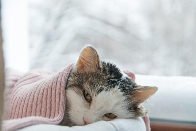 diabete mellito gatto sintomi