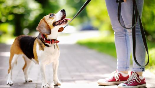 Passeggiare con il cane: passeggiate interattive in città
