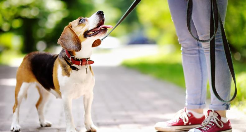 passeggiare con il cane in città